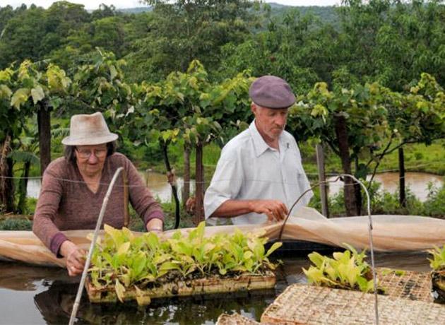 Incluso muchos agricultores pequeños podrían verse perjudicados en lugar de beneficiados por este cambio