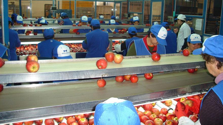 Industria de las frutas: empaque de manzanas.