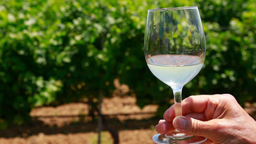 Suter puso en funcionamiento el negocio de elaboración y producción de vinos en Mendoza