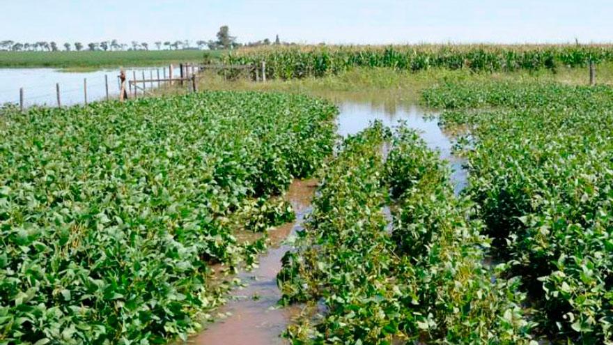 La llegada de las lluvias trae nuevamente optimismo sobre que este año pueda darse un salto exportador en el rubro agrícola