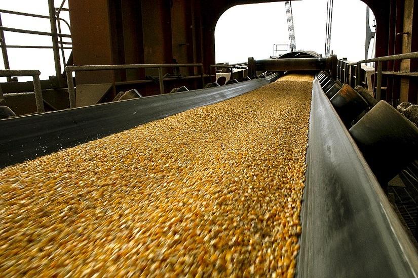 El sector del maíz, uno de los que estuvo en el centro de las pujas intrasectoriales por los precios de insumos