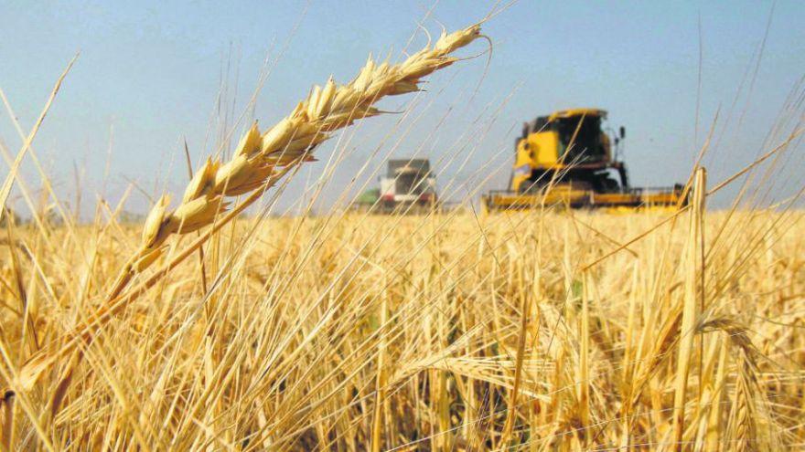 El decreto autoriza en forma permanente y con cupo la compra de trigo sin aranceles a otros países que no sean del Mercosur