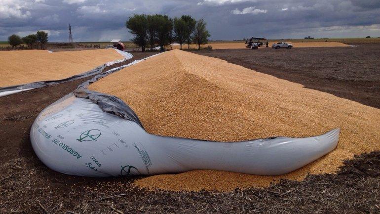 El auge de la soja puede llevar a un masivo cambio de rubro entre los productores rurales