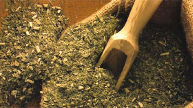 La producción de yerba mate se mantuvo desde que se inició la cuarentena