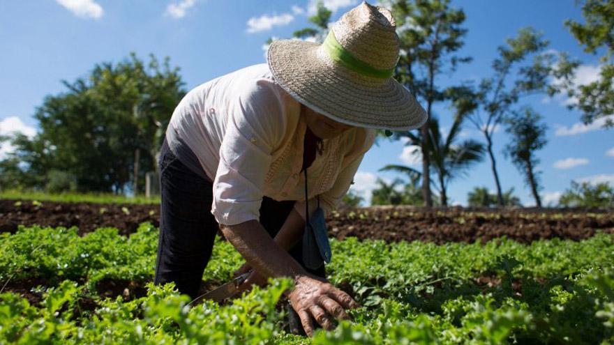Existen pequeños negocios sustentables que se pueden llevar a cabo con poco dinero