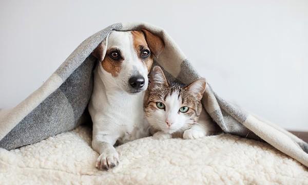 En HSBC ofrecieron a los empleados atención veterinaria gratuita y a distancia