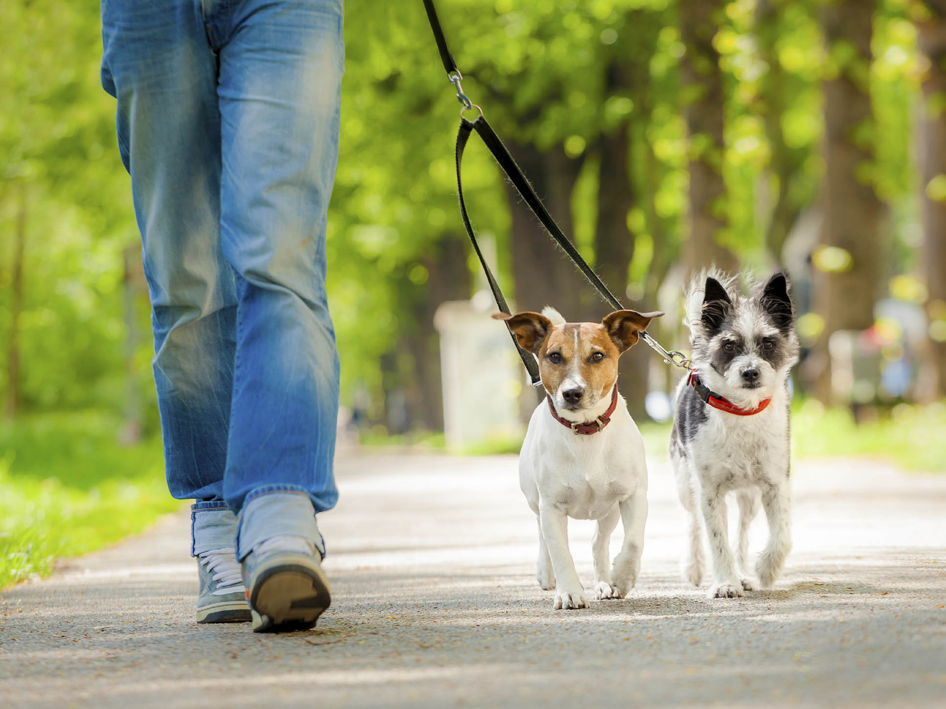 El paseo es clave