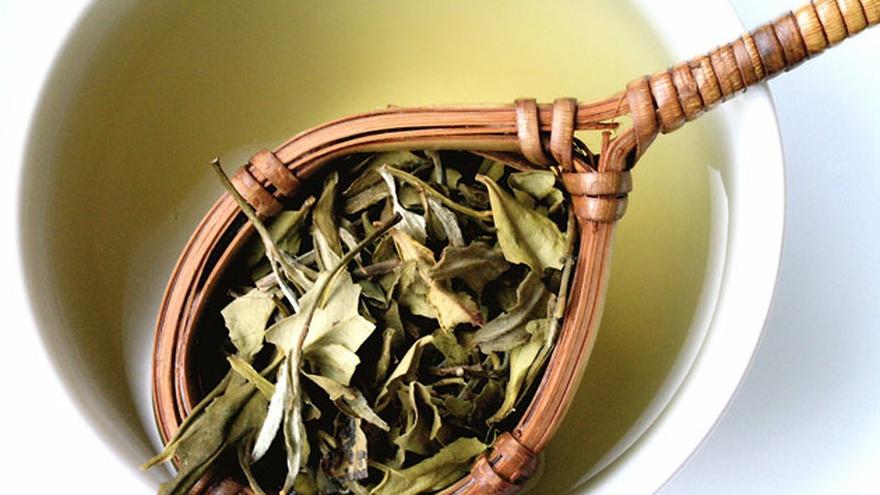 Tomar té verde puede ayudar a quemar calorías porque aumenta la diuresis