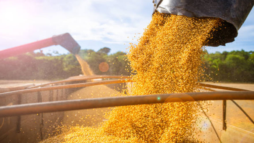 ¿Aparecerán los dólares de la soja?: Di Stefano advierte que el Gobierno no dio buenas señales.