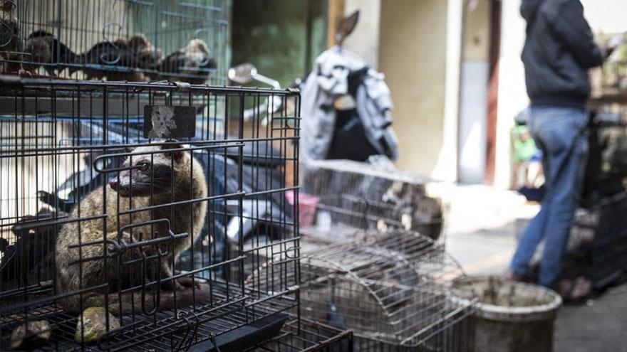 Los mercados de animales o de productos animales puede ser un foco de infección