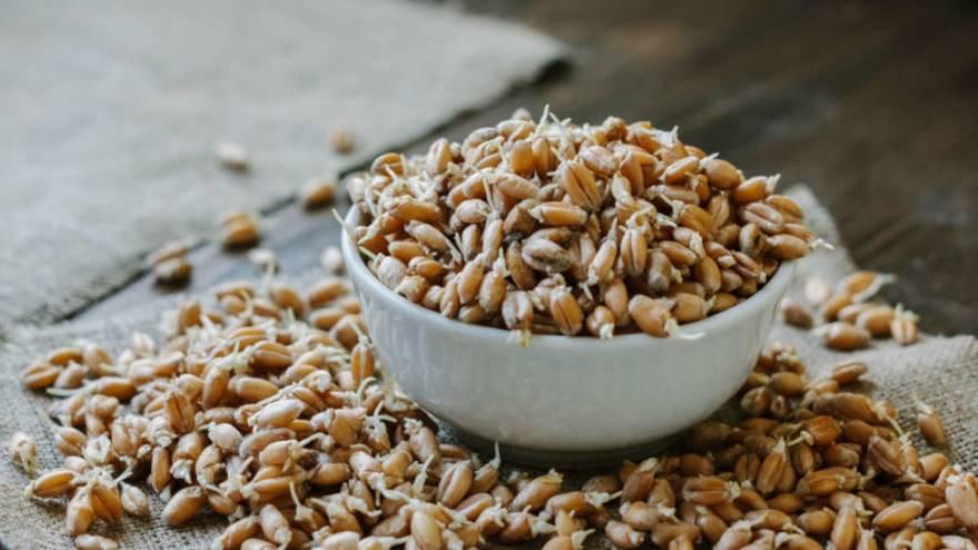Así se ve el germen de trigo