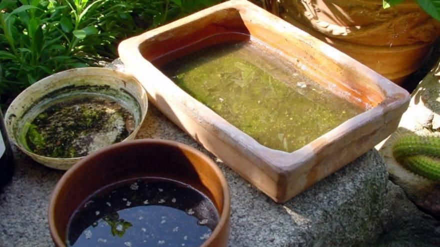En el agua estancada se pueden criar los huevos de mosquito