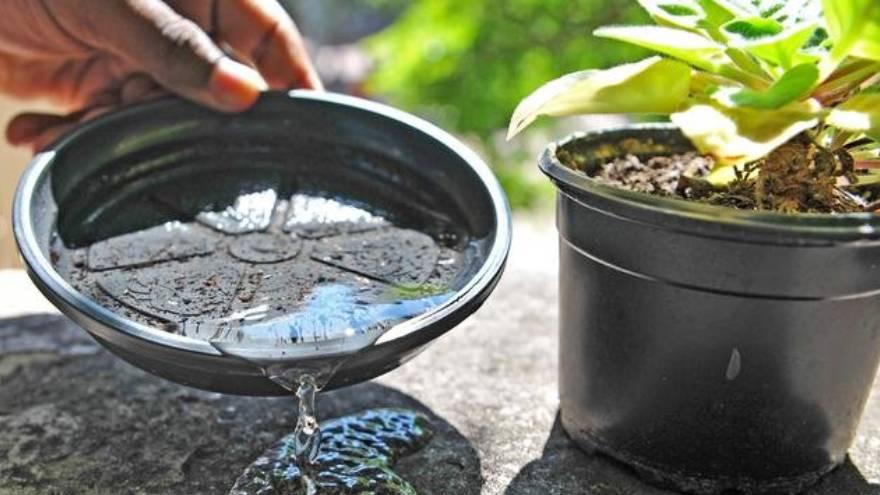 El agua estancada en los domicilios favorece el desarrollo del mosquito