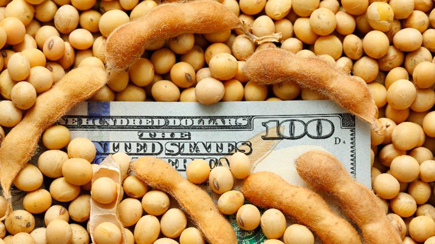 Dólares: la soja disminuirá su aporte este año.