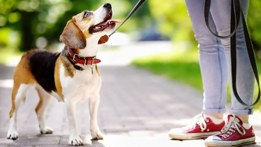 El perro es el que mejor representa el compañerismo.