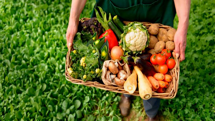 Los productos agroecológicos pueden volverse un negocio rentable y saludable