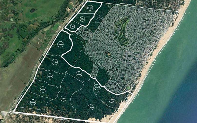 El área de bosques donde se desarrollaría el proyecto.