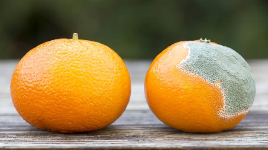 Las frutas pueden tener moho, aún cuando están en la heladera