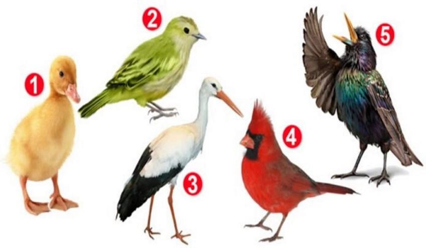 Elegí un pájaro y descubrí aspectos ocultos de tu personalidad