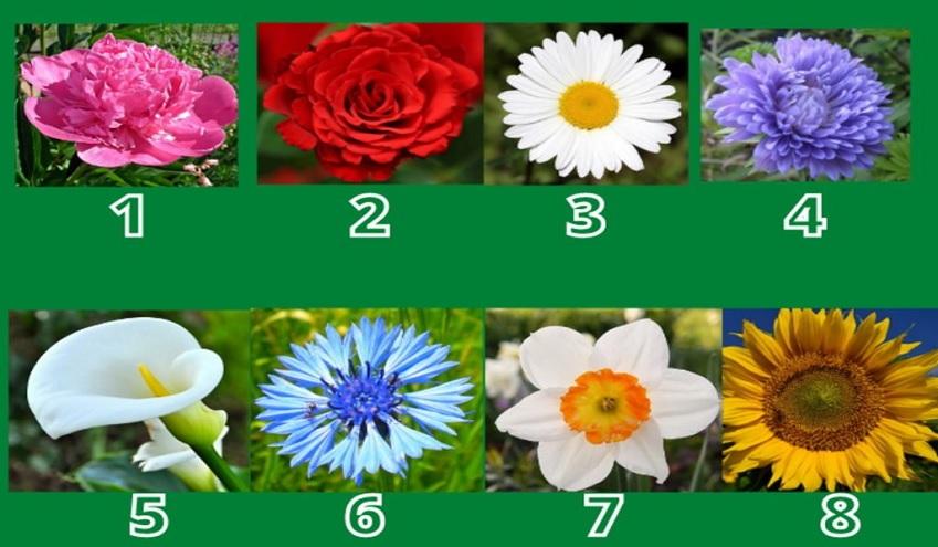 Dime qué flor eliges y te diré tu mayor fortaleza