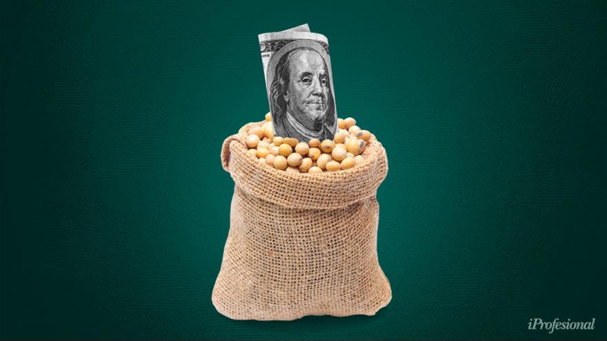 La soja, en alza: entrarían más dólares al país.