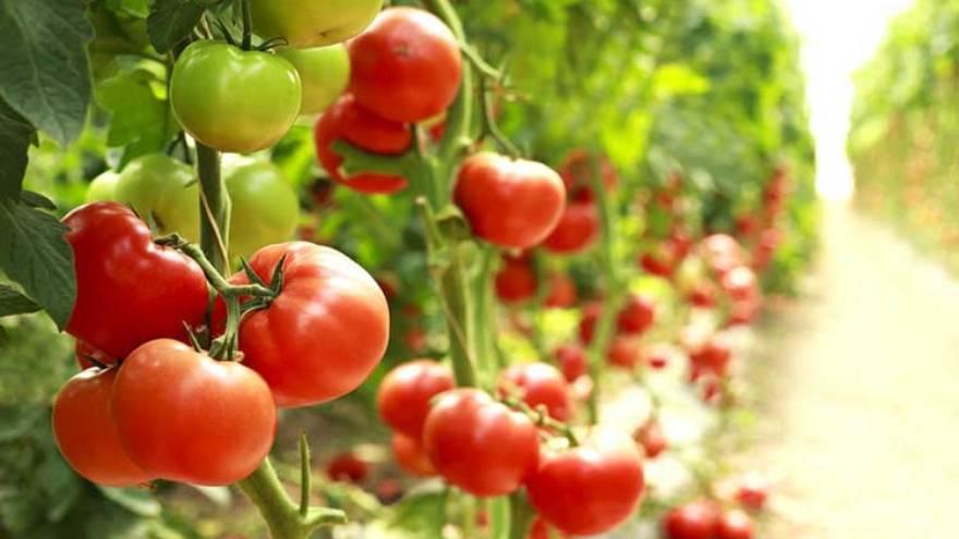 El tomate se puede sumar a cualquier comida