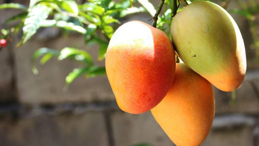 El mango es una fruta muy rica en vitaminas