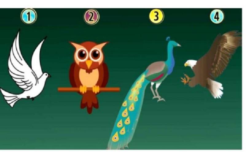 Test de personalidad: descubrí tu verdadera naturaleza según el pájaro que elijas
