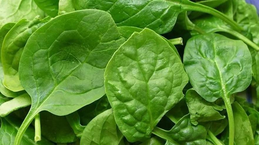 La espinaca está llena de nutrientes esenciales para luchar contra la fatiga