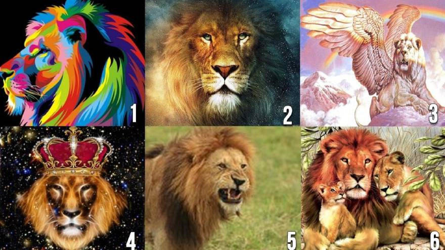 ¿Qué león elegís?