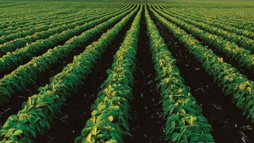 Cresud es una compañía agropecuaria de IRSA.