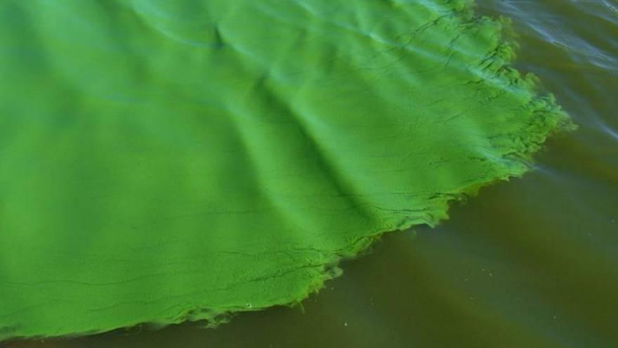 Las cianobacterias ponen el agua de este color