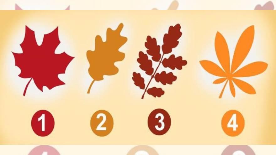 El test de las hojas