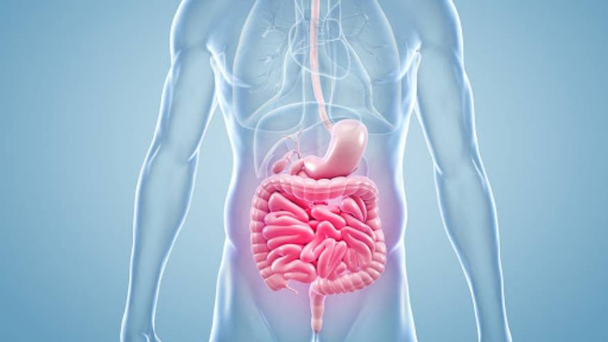 Un desequilibrio en la microbiota intestinal podría ser la causa de esta enfermedad