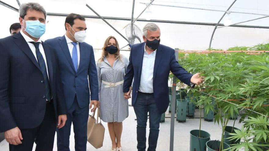 Gobernadores posan junto a las plantas de marihuana.