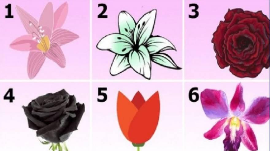 Elegí una de las flores y leé los resultados