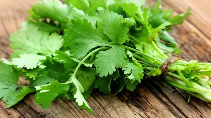 El cilantro es de la familia del perejil y es originaria de Asia
