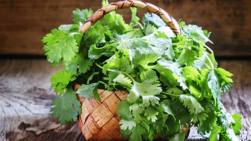 El cilantro es una de las hierbas que se puede emplear en la cocina como saborizante