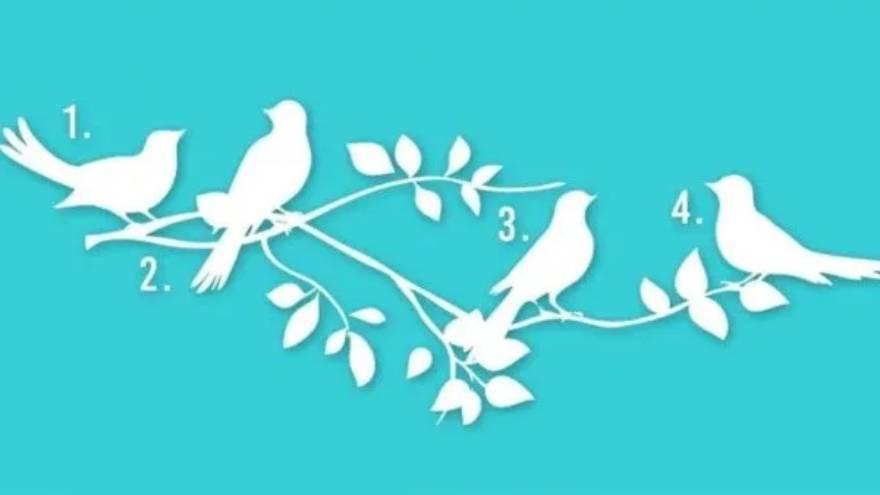 Los pájaros que se pueden elegir
