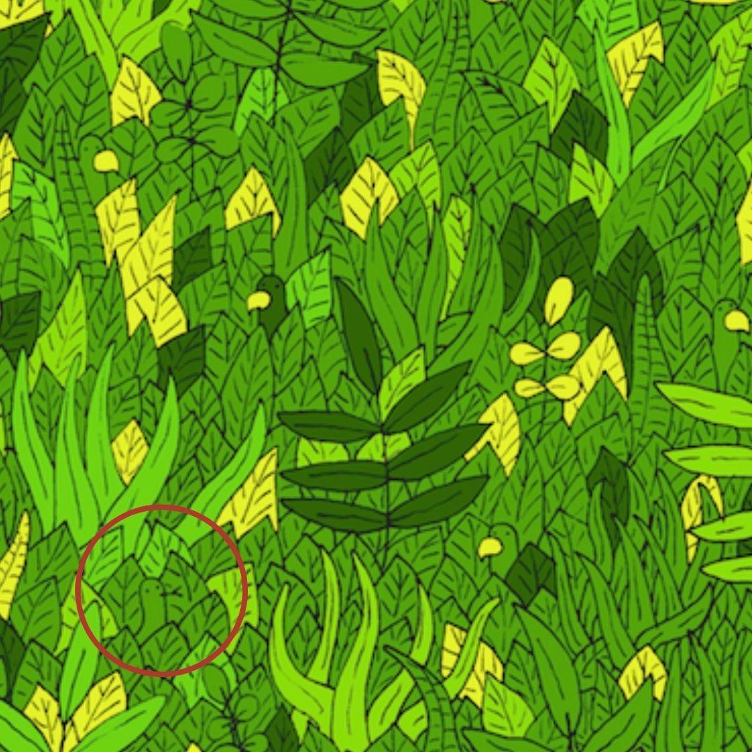¡Ahí está! La serpiente se encuentra en el cuadrante izquierdo inferior de la imagen
