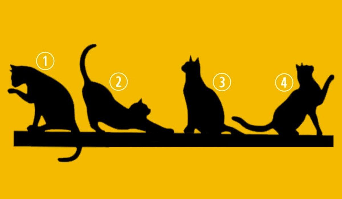 ¿Qué gato elegis? Tu elección te guiará en el propósito de tu vida