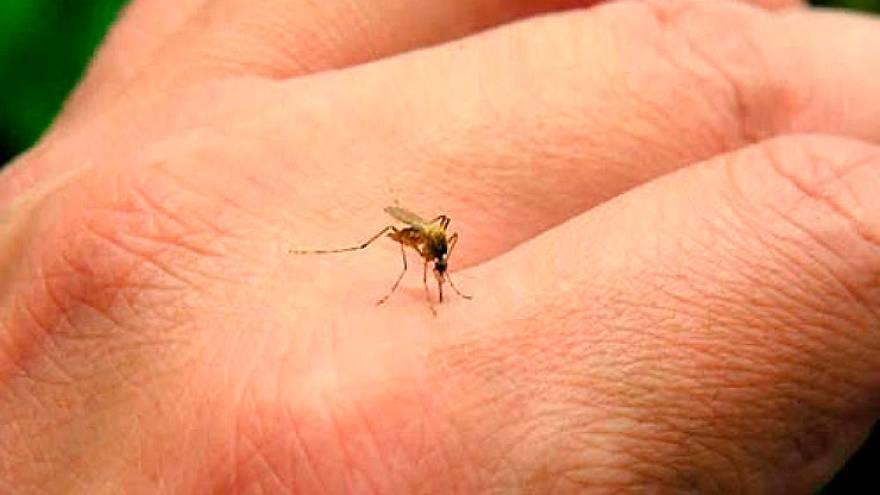 El dengue es la enfermedad viral transmitida por mosquitos de más rápida propagación