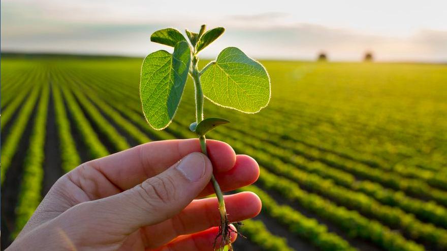 El proceso de liquidación de agro-dólares va llegando a su fin, aunque se mantiene en julio.