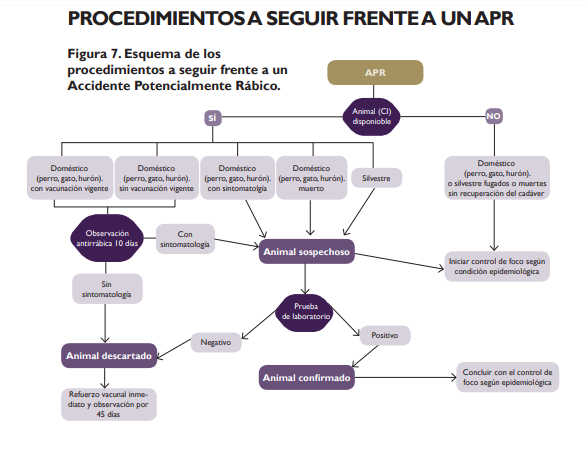 Fuente: protocolo del Ministerio de Salud
