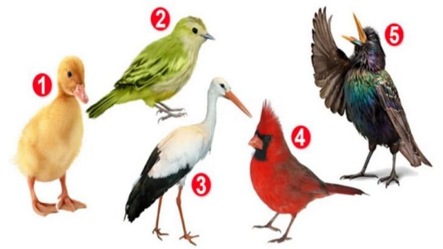 Estas cinco opciones significan representan distitnas maneras de encarar la vida. ¿Cuál elegís?