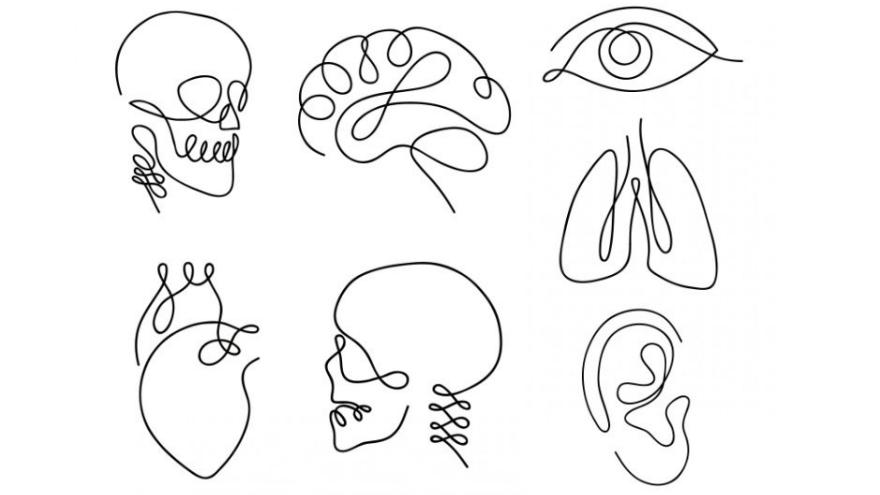 ¿Qué parte del cuerpo elegís? Las opciones son calavera, cerebro, ojo, pulmón, corazón, mandíbula y oreja