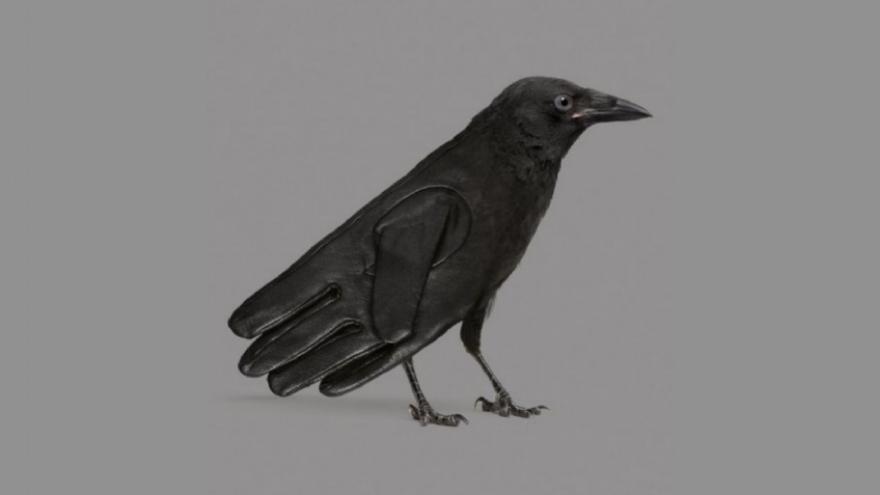 ¿Qué viste primero: el guante o el pájaro?